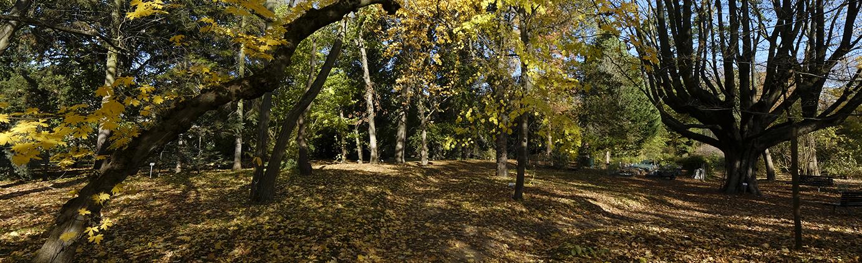Arboretum Herbst Bäume